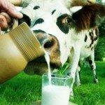 Чем же так полезно молоко?