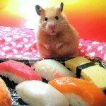 Правда ли, что от суши не поправляются?