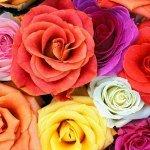 Студия цветов «Шипы и розы» — один из лучших компаний по доставке цветов